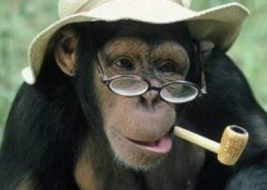 صور حيوانات مضحكة- صور مضحكة