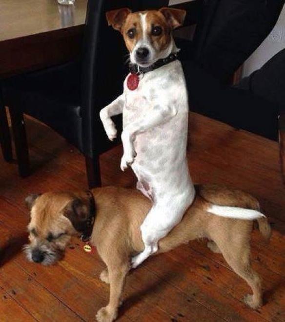 صور حيوانات مضحكة 2018-صور مضحكة