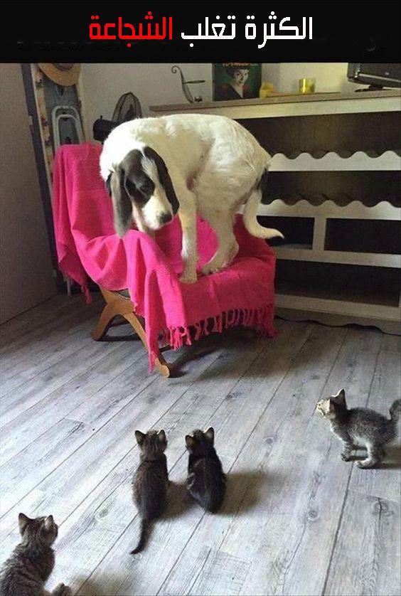 صور حيوانات مكتوب عليها كلام مضحك-صور مضحكة