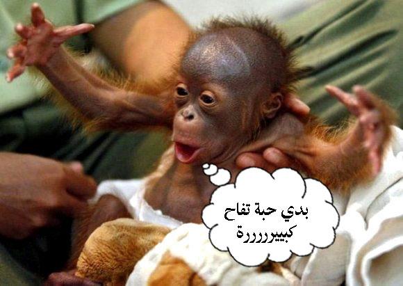 تعليقات صور حيوانات مضحكة-صور مضحكة