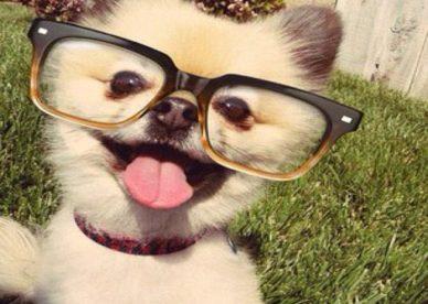 الصور الجديدة المضحكة حيوانات-صور مضحكة