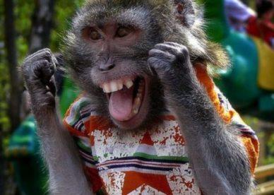 صور حيوانات قرود مضحكة 2018-صور مضحكة