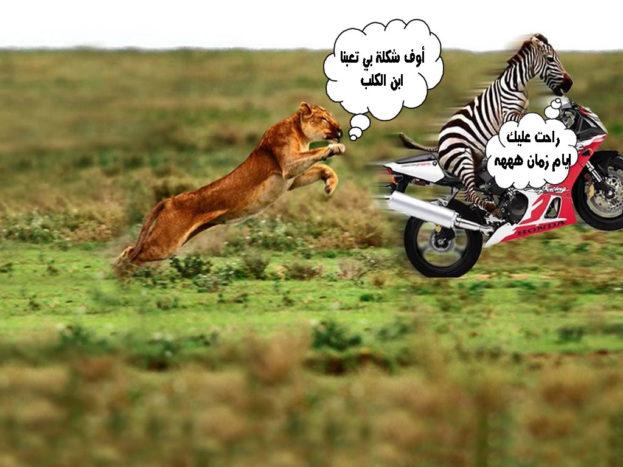 صور حيوانات عليها تعليقات مضحكة- صور مضحكة