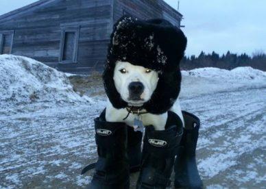 أحلى صور حيوانات كلاب مضحكة-صور مضحكة