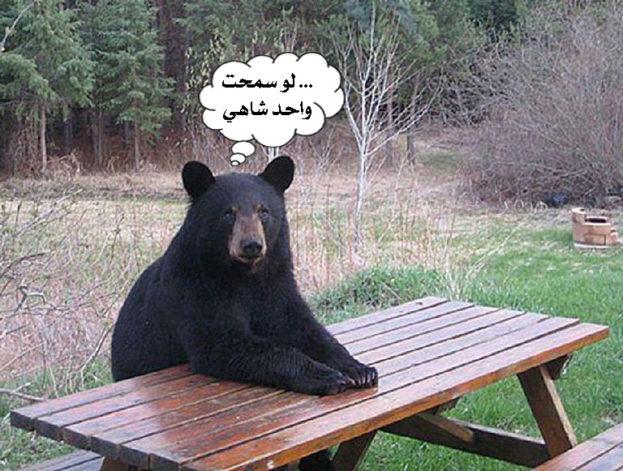 صور حيوانات وتعليقات مضحكة-صور مضحكة