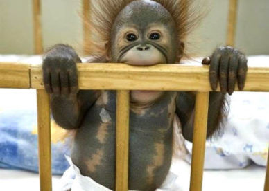 صور أشكال طرائف حيوانات مضحكة-صور مضحكة