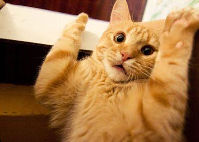 صور قطط مضحكة 2018-صور مضحكة