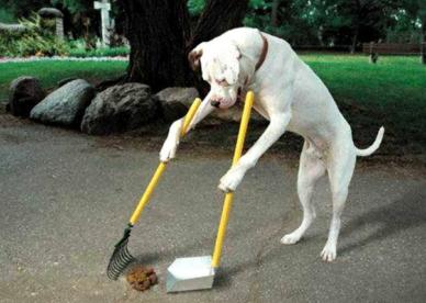 صور حيوانات مضحكة فيس بوك-صور مضحكة